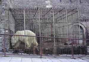 animals-behind-bars5