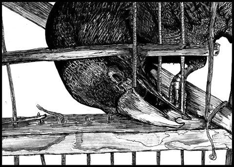 pajarorompiendobarrotes